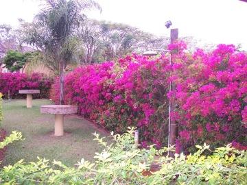 Foto 05 Fazenda Paraizo Primavera.1_JENBicudo enviou