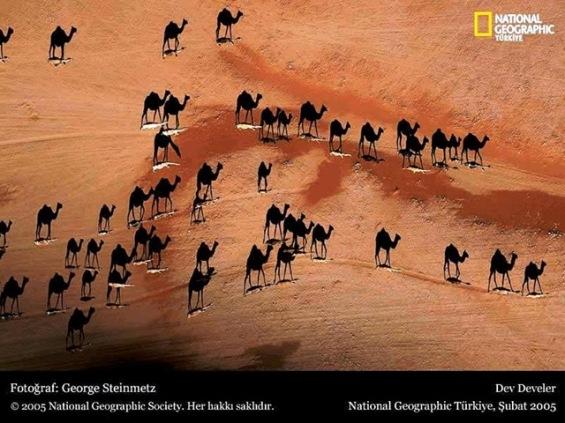 National Geografic Turquia_Camelos ao por do sol
