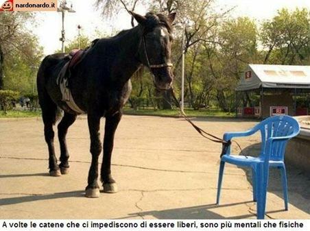 Cavalo preso a uma cadeira plástica