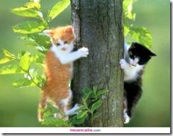 0008_gatos escalam tronco de árvore_meusrecadosdotcom
