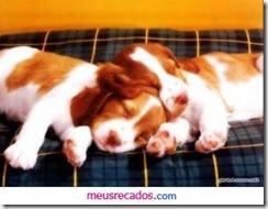 0031_dois cachorrinhos_meusrecadosdotcom