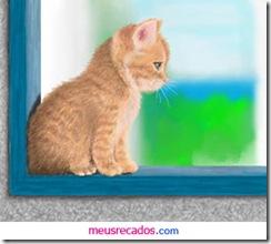 0032_gatinho na janela_meusrecadosdotcom