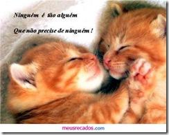 0038_gatinhos com mensagem_meusrecadosdotcom